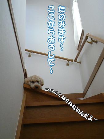 階段が降りれないくーかい 1