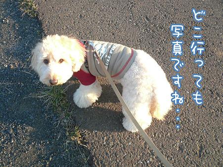 お散歩ダイスキ♪ くーかい 4