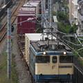 Photos: 国鉄色EF65