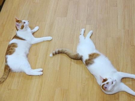 ピノ&パピコ「のびのびなのよ~」