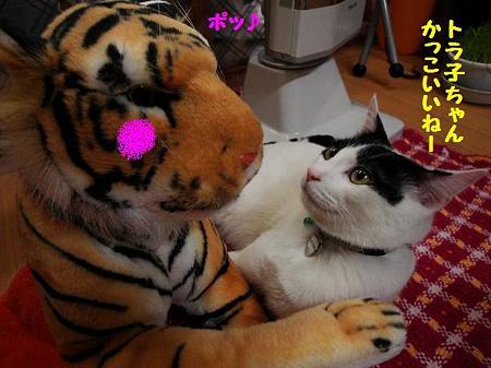 はっちゃん&トラ子5