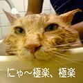 Photos: にゃ~極楽極楽