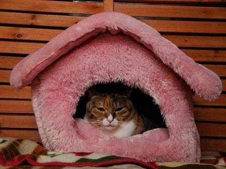 ミケコ「一戸建て♪」