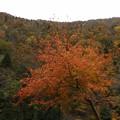 山中の紅葉