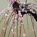 Photos: 花簪
