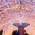 10月30日時の栖なう。今年も光のトンネルがはじまりました(^ ^)