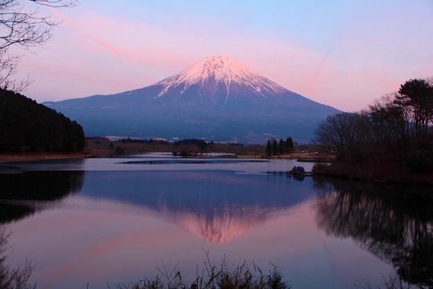 1月28日田貫湖からの夕方富士山~ちょっとピンク(^ ^)