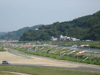有田市鯉のぼり2