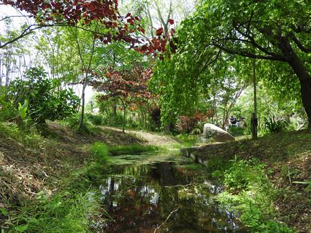 京成バラ園 睡蓮の池01