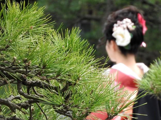 写真: 娘の結婚03 前撮り(色打掛)