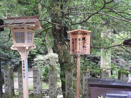 鞍馬寺48 由岐神社 鹿子の木
