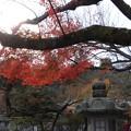写真: 石山寺16 いい感じの紅葉