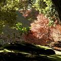 写真: 石山寺64 スポットライト1―見守られ育まれる命
