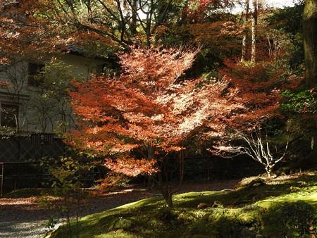 石山寺86 スポットライト2―輝く紅葉