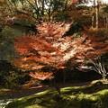 写真: 石山寺86 スポットライト2―輝く紅葉