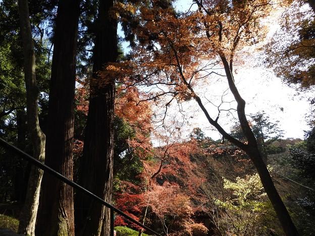 写真: 石山寺92 紅葉05