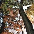 写真: 石山寺93 紅葉06