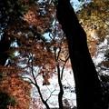 写真: 石山寺94 紅葉07