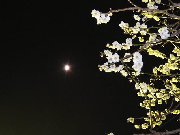 写真: 梅月夜 4