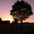 Photos: 一本の樹