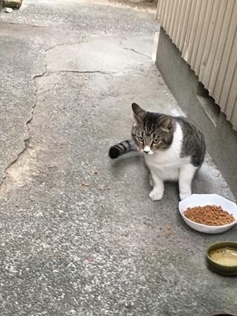 アオイ君の兄弟猫2