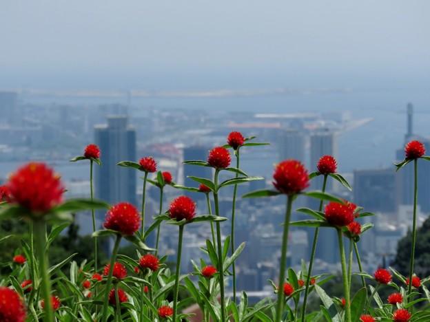 神戸の港町を背景に