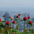 Photos: 神戸の港町を背景に