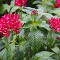 Photos: 公園に咲く花