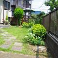 写真: まだ暑苦しくない庭