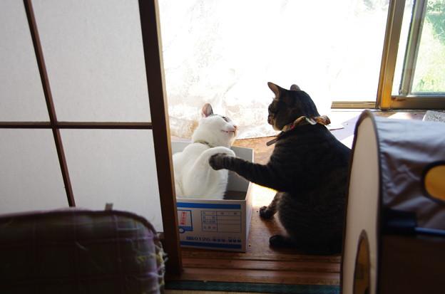 写真: ダンボールの争い~ナナマカ2
