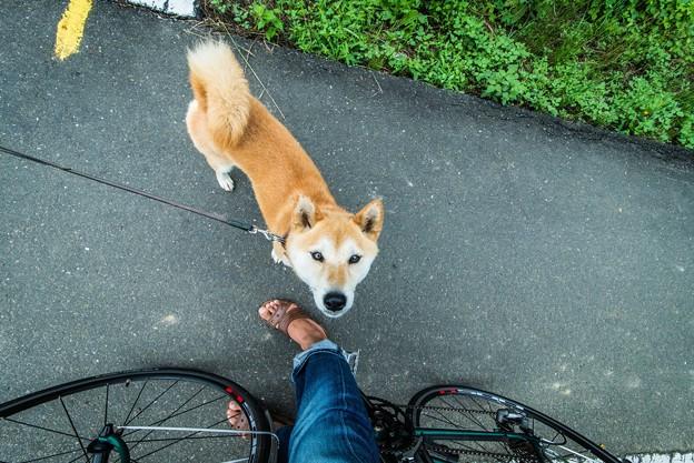 犬と自転車と俺の足@荒川土手