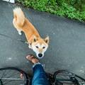 Photos: 犬と自転車と俺の足@荒川土手