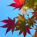 写真: 秋色探し♪