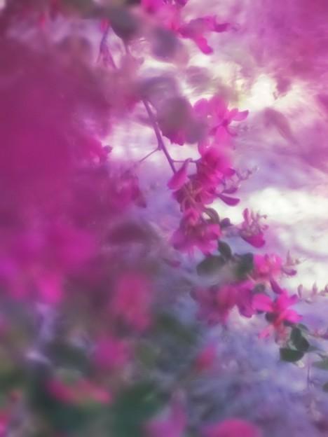 秋の七草、萩