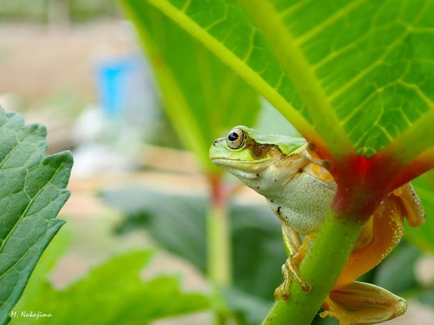 Photos: カエルくん大志を抱け