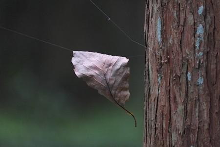 2014.09.06 瀬谷市民の森 枯葉