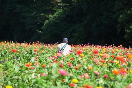 2014.09.29 追分市民の森 ヒャクニチソウ畑と小父さん