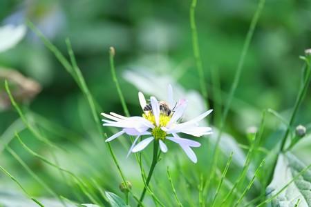 2014.10.24 追分市民の森 ヨナメにミツバチ
