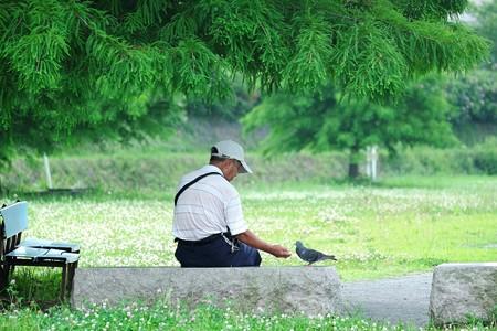 2016.07.12 和泉川 老人とハト