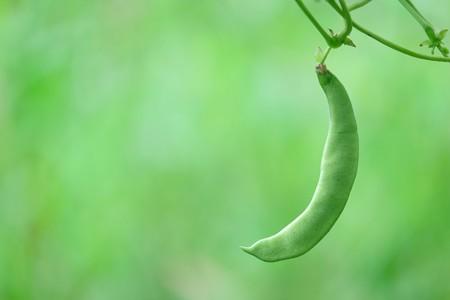 2016.07.16 追分市民の森 えんどう豆