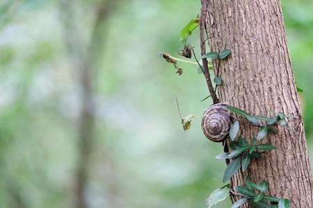 2016.10.14 瀬谷市民の森 団栗が落ちる木に蔦とカタツムリ