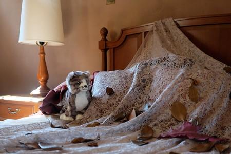 2016.10.26 ベーリック・ホール 寝室 サウィン祭 猫に感謝