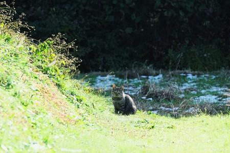 2016.11.26 追分市民の森 畦に猫