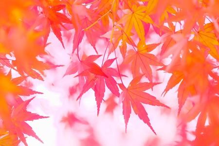 2016.11.28 和泉川 モミジ