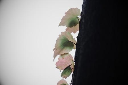 2016.11.29 瀬谷市民の森 蔦 冬色