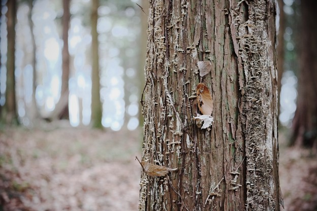 2016.12.29 瀬谷市民の森 枯木