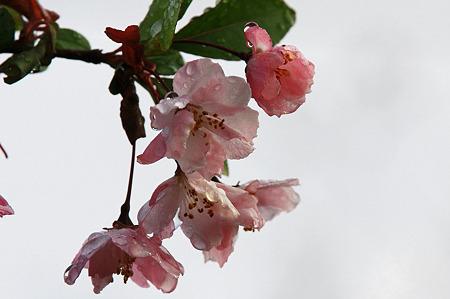 2010.04.13 和泉川 カイドウ