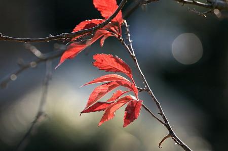 2010.12.26 和泉川 風と桜の葉