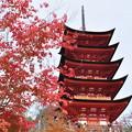 Photos: 宮島の紅葉