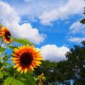 Photos: 夏の終わり・・・・